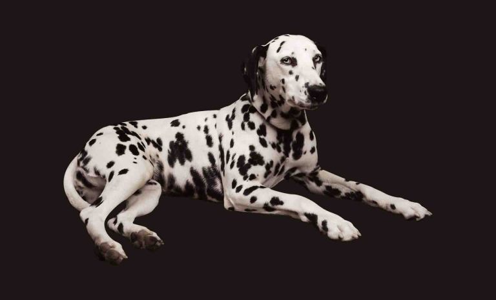 Cachorros coleção imagens transparentes PNG