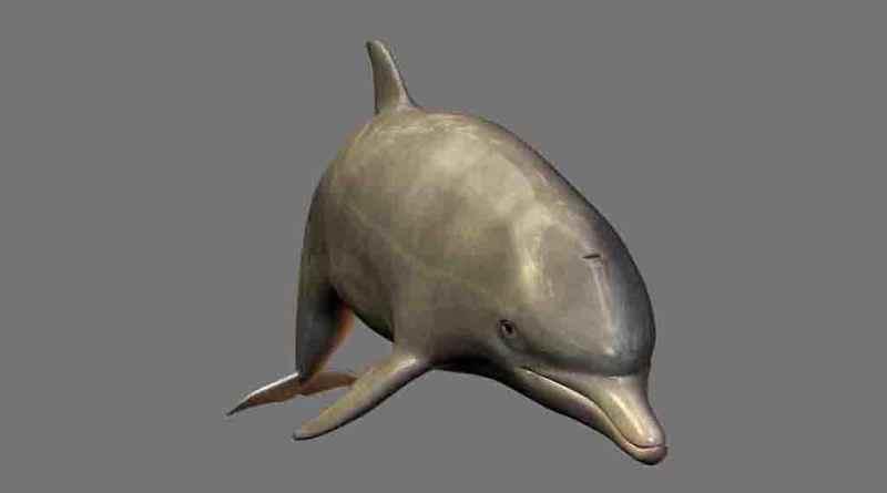 Golfinhos PNG