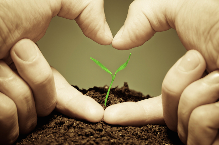 5 Ways to Optimize Your Charitable Giving - David DeWolf