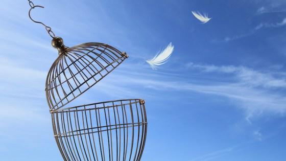 The Four Freedoms of True Wealth - David DeWolf