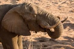 06 Elefanti009