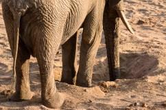 06 Elefanti010