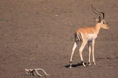 07 Antilopi, Zebre, Giraffe048