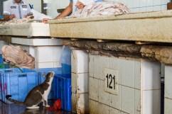 Dubai - Mercato del pesce.