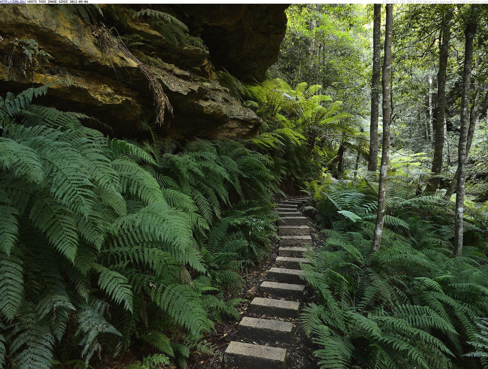 blue-mountains-national-park-new-south-wales-australia