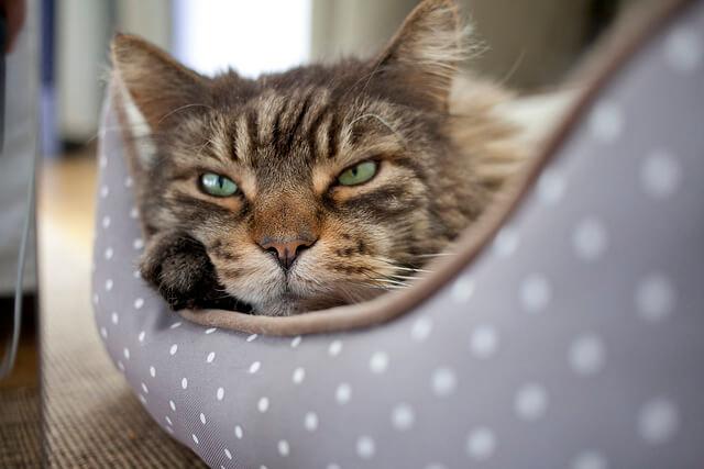 marketing de atraccion y la leccion del gato