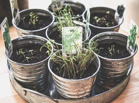 Macetas con hierbas aromáticas en casa