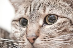 photographer self portrait in kat eye © David Hamilton Melby
