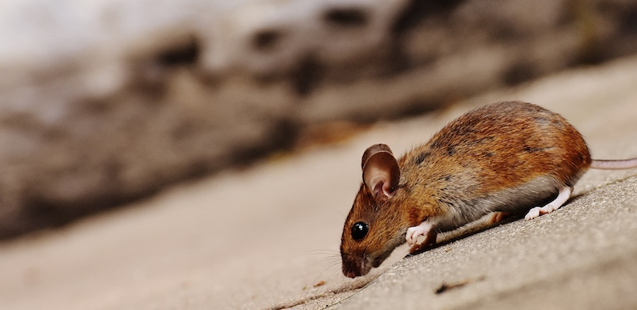 Dealing with Pest Infestations