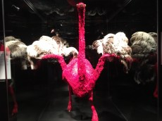 The circulatory system of an ostrich.