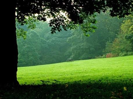 picnic-bench