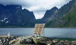 travel photo arctic circle Norway - stockfish drying beside a fjord - image copyright David J Rodger