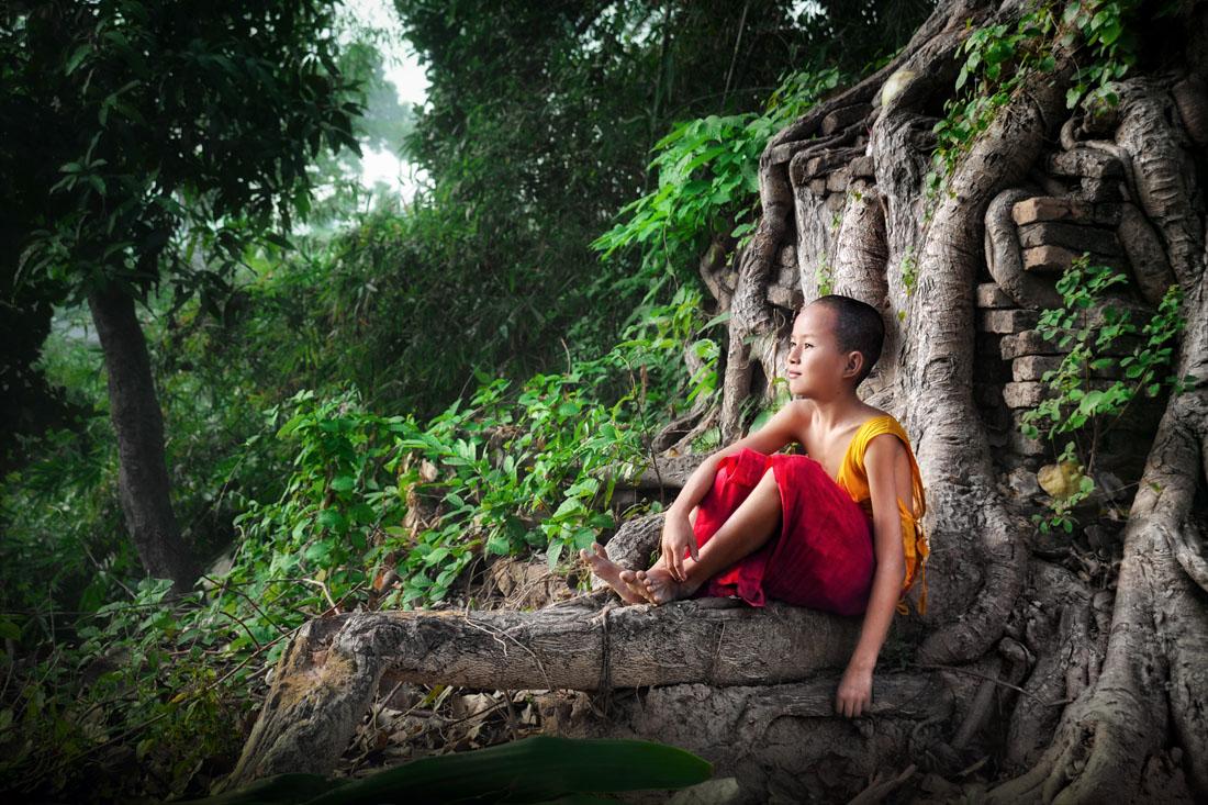 https://i2.wp.com/davidlazarphoto.com/amp/wp-content/uploads/2012/07/06-David-Lazar-The-Tree-of-Life.jpg