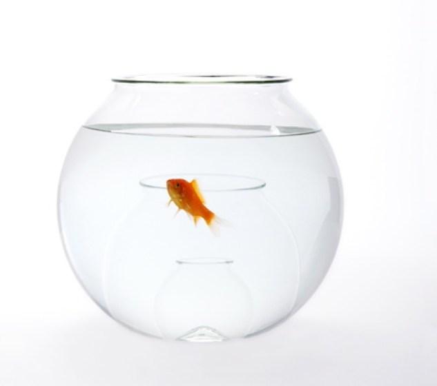 Small fish big pond