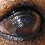 A flawed cornea?