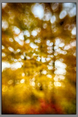 Fall Color Abstract 01