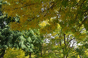 David Moulton Toronto Psychotherapist | Picture of Tree with Yellow and Green Leaves