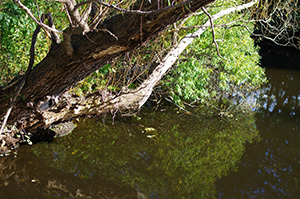 David Moulton Toronto Psychotherapist | Picture of Trees in Water