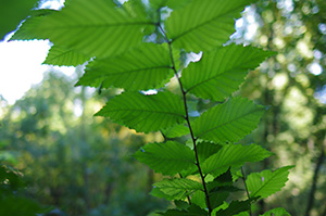 David Moulton Toronto Psychotherapist | Picture of Green leaves