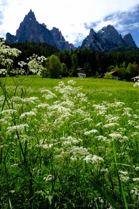 davidniddrie_italy_sudtirol-4878