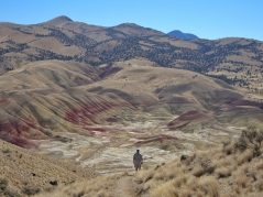 An expansive view of the Painted Hills from Carroll Rim Trail