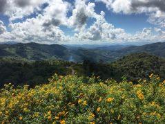 Mountains surrounding wild sunflower field at Doi Mae U-Kho