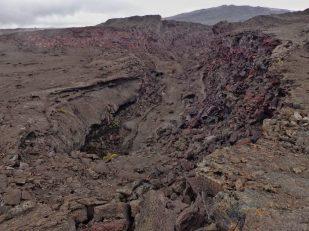 Scenery along Nāpau Trail