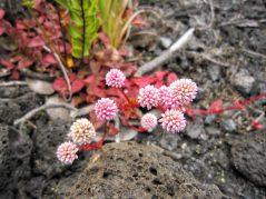Colors in Lava Field 2