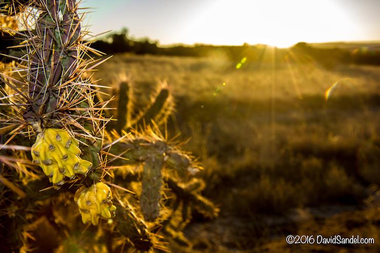 VanLife Cactus Flower Santa Fe