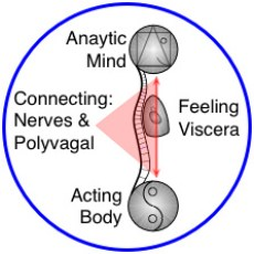 "Mind-Body & Yin-Yang in Yoga Therapy & Yoga-based Bodywork"" medical massage, structural bodywork, yoga therapy"