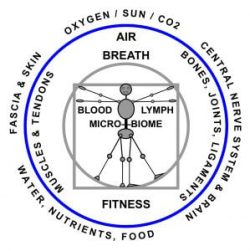 Whole Health Body Systems: medical massage, structural bodywork, yoga therapy