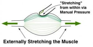 Tension Release from Stretching & Manual Pressure - Muscle Pain Relief and Stress Reduction and the cause for sore muscles