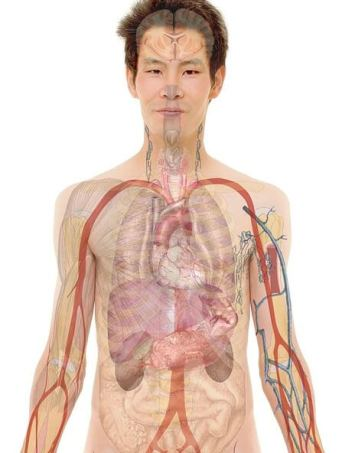 cardio vascular system - medical conditions and education