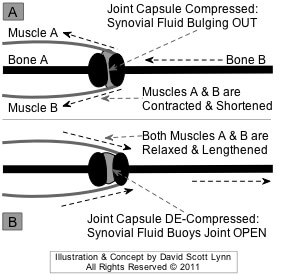 muscles compress joints - doctor sarno back pain relief w/ joe polish