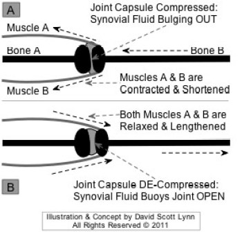 increased compression of joint leads to joint pain, joint degeneration, osteoarthritis symptoms