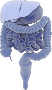 intestines, muscle therapy, mindful medical massage