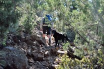 Our faithful trail companion.