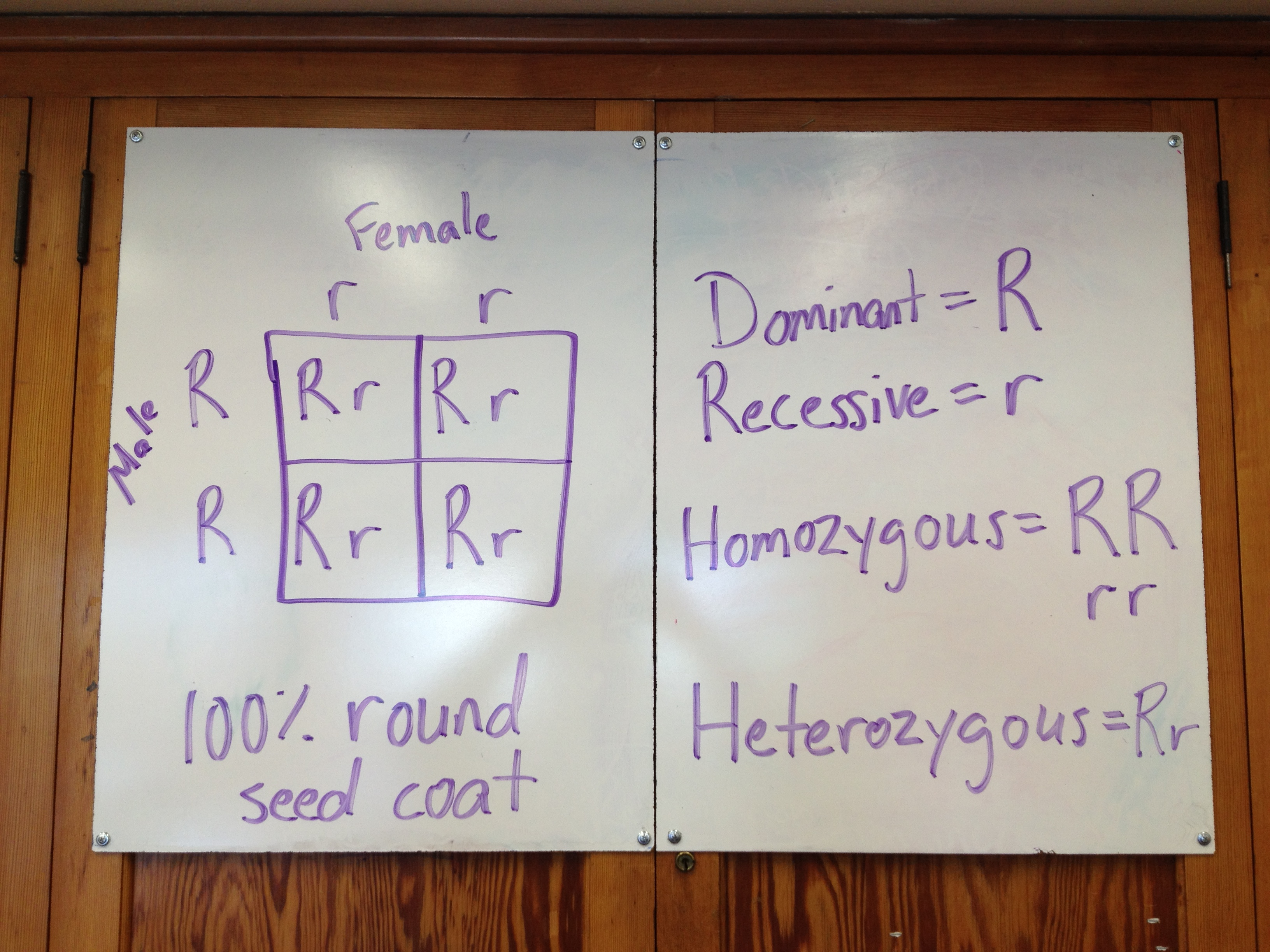 Reproduction Inheritance And Meiosis Punnett Squares