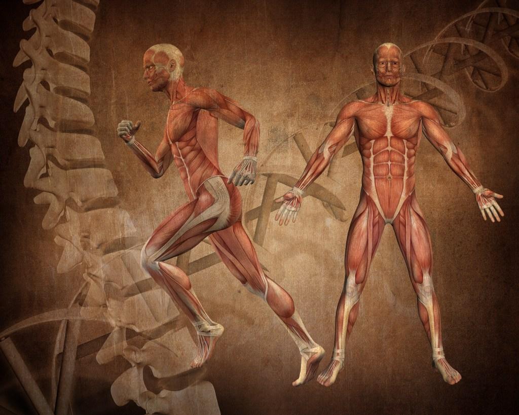 Medical figure
