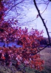 Autumn - Autumn Scene