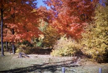 Autumn - Trees
