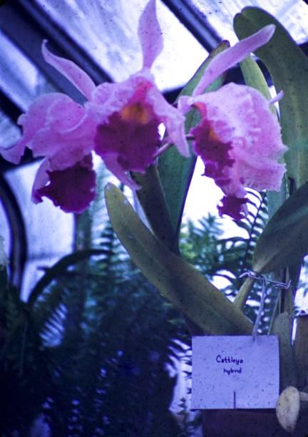 Loring Park - Orchids