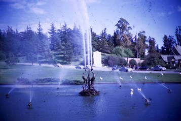 Forest Lawn - Duck Pool