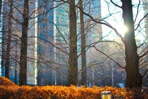 canary-wharf-winter-sun-stroll-58