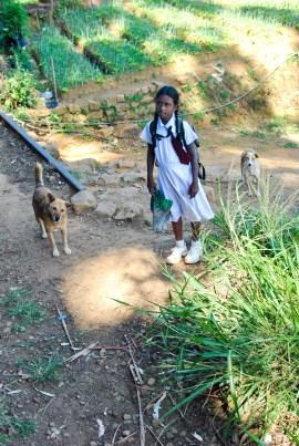 Train Kandy to Nuwara Eliya-21