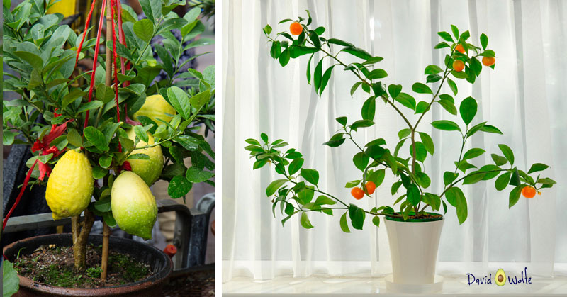 No Garden? 18 Things You Can Grow At Home In Containers