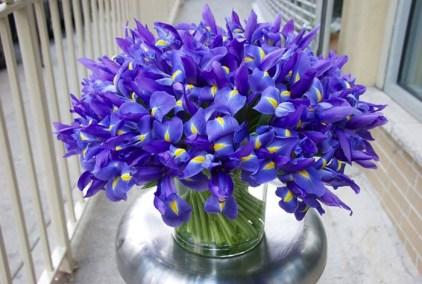 http://botanicalbrouhaha.com/?p=15520