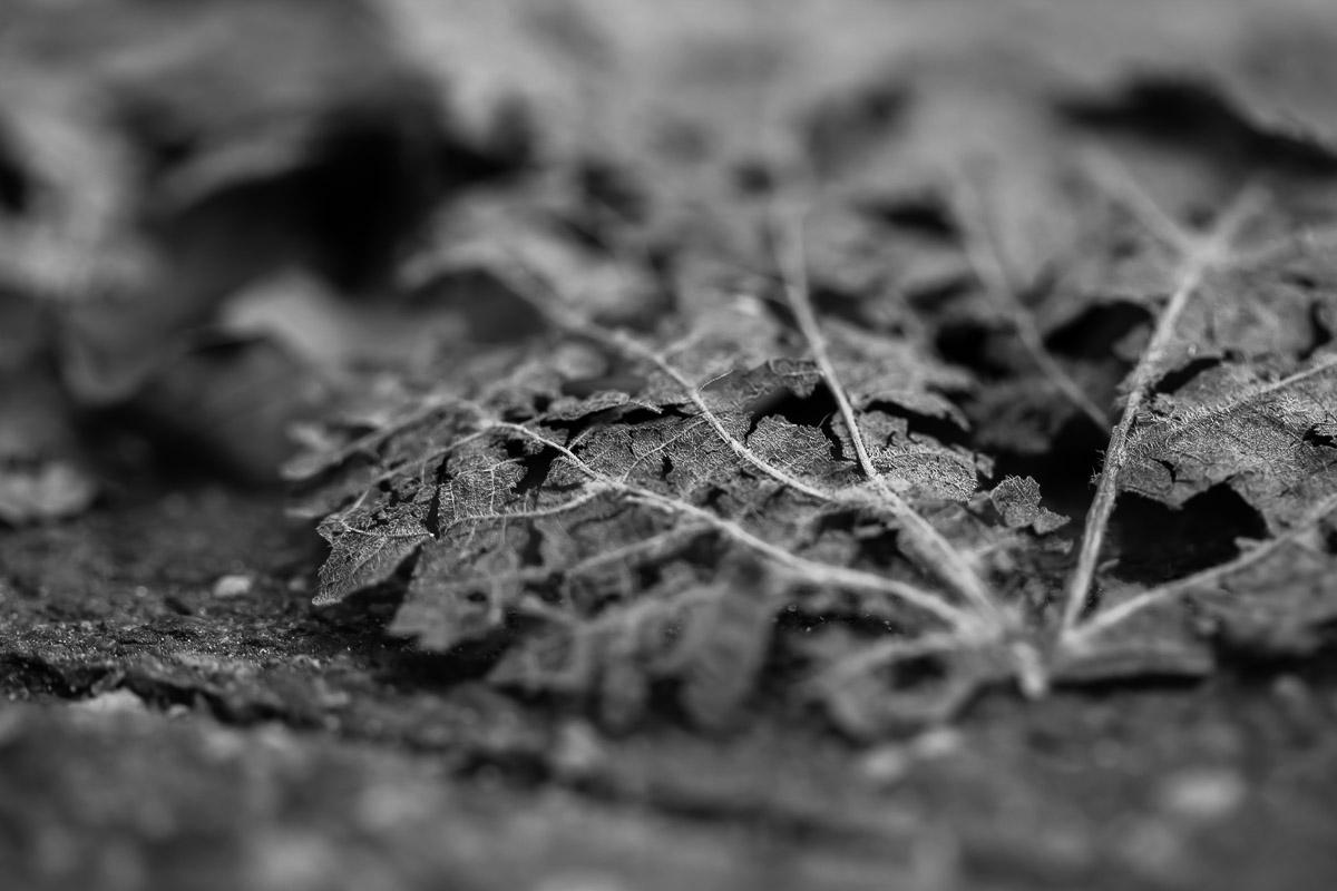 Zerfallende Blätter auf der Straße