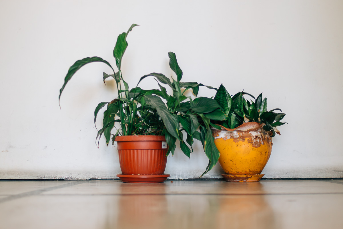 Two potted plants on the floor of a corridor