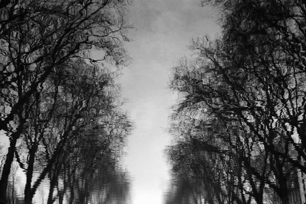 Zwei Baumreihen spiegeln sich an einer Wasseroberfläche